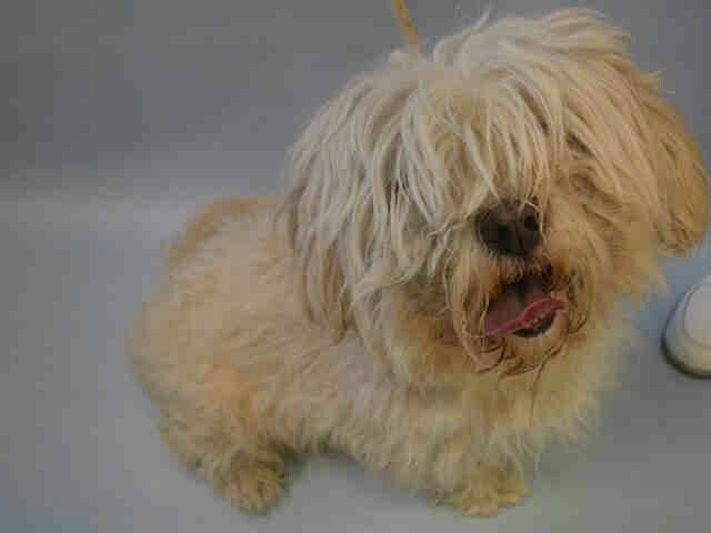 """""""CHANCE""""- TO BE DESTROYED TODAY BY NYC ACC -FRI.-12/02/16- AVAILABLE AT MANHATTAN ACC -#A1098145."""