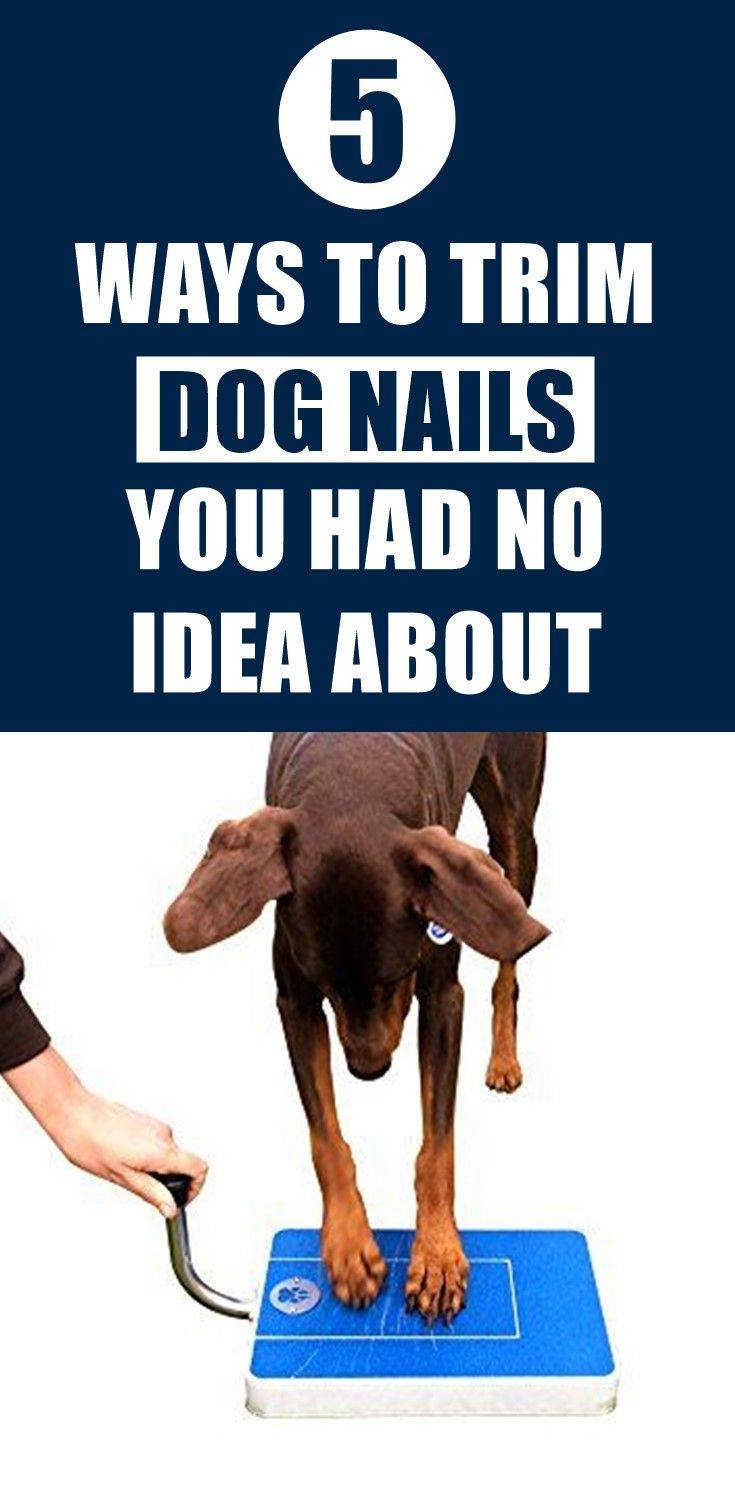 How to trim overgrown dog nails without a nail clipper in