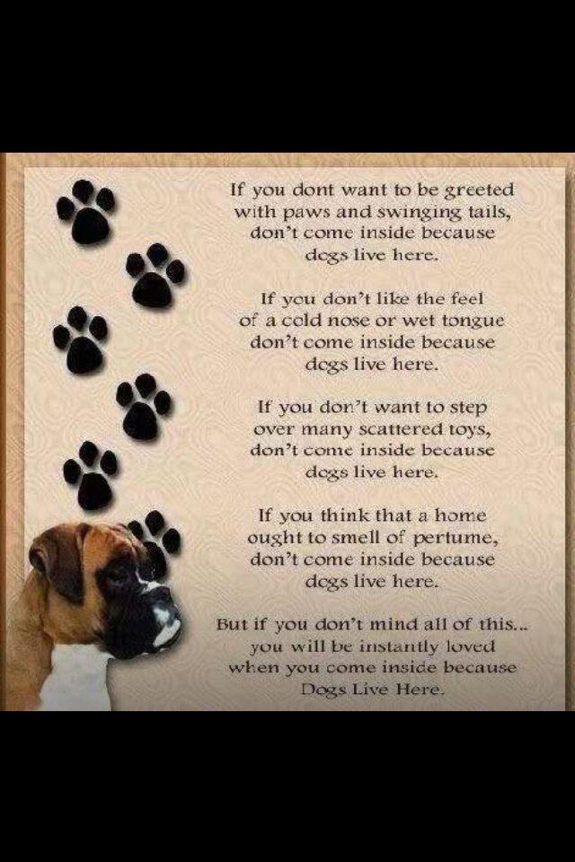 Man S Best Friend Dog Poem