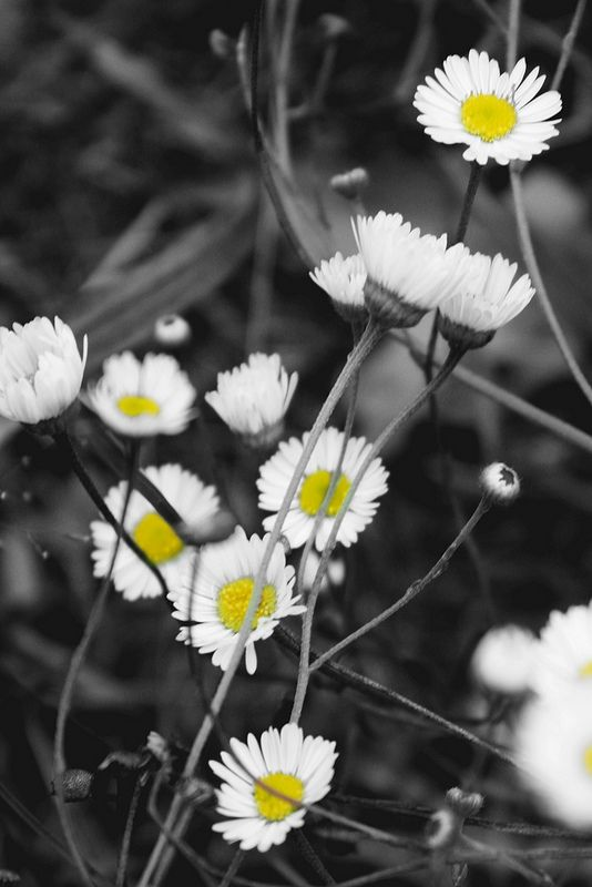 black and yellow #photography