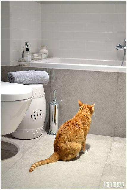 My Cats & Interior Ideas: Bathroom