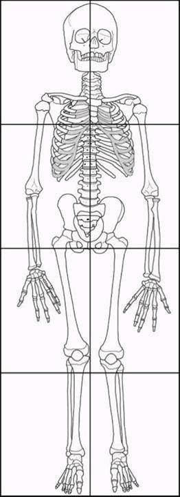 free skeleton and skeletal system printables  activities and resources  including this life size