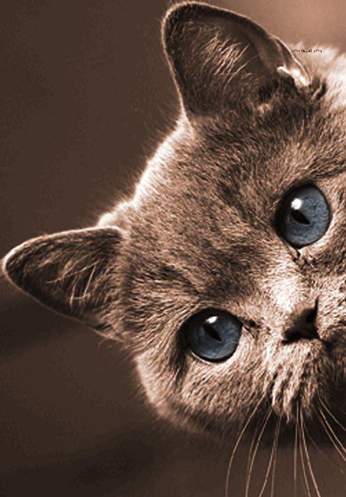 Kitty kitty ! PurritoCat