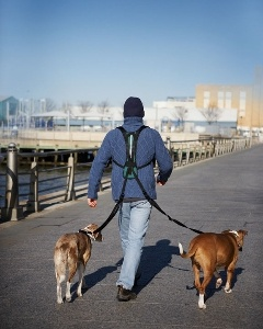 Had to give in and order one of these. You can walk 4 dogs at once!