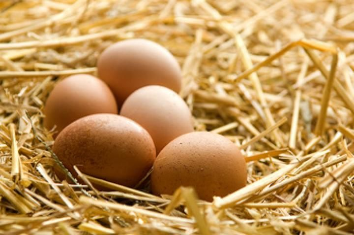 Useful and surprising egg facts and egg information from The Old Farmer's Almanac.