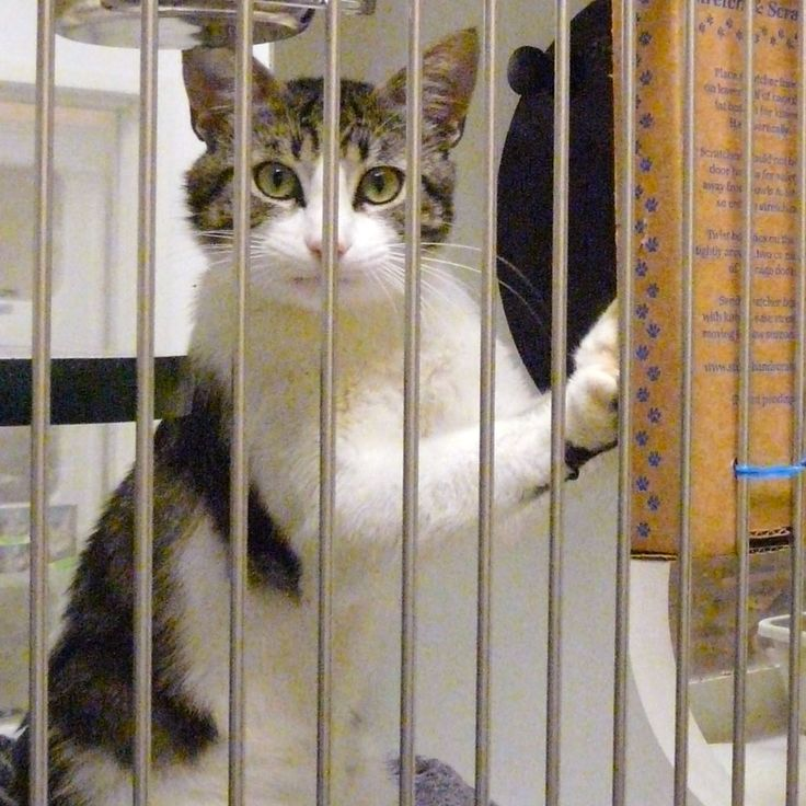 Small Metal Animal Shelters : Shelters cats and animal rescue on pinterest