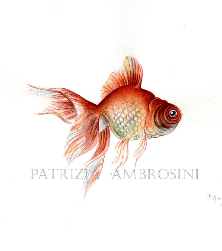 Original 9x7 Watercolour Red Fish. NOT A PRINT ..Original Painting, animal ,fine art,fish,red,water. $45.00, via Etsy.