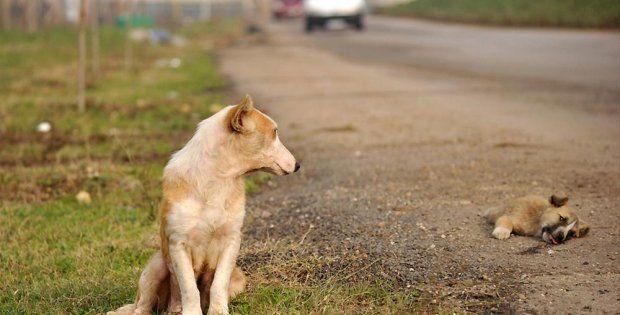 """TBMM Çevre Komisyonu, Hayvanları Koruma Kanununda Değişiklik Yapılmasına Dair Kanun Tasarısı'nı değişikliklerle kabul etti.  Tasarıyla, Hayvanları Koruma Kanunu'na, """"güçten düşmüş hayvan"""", """"hayvan bakımevleri"""" ve """"hayvan refahı"""" tanımları ekleniyor."""