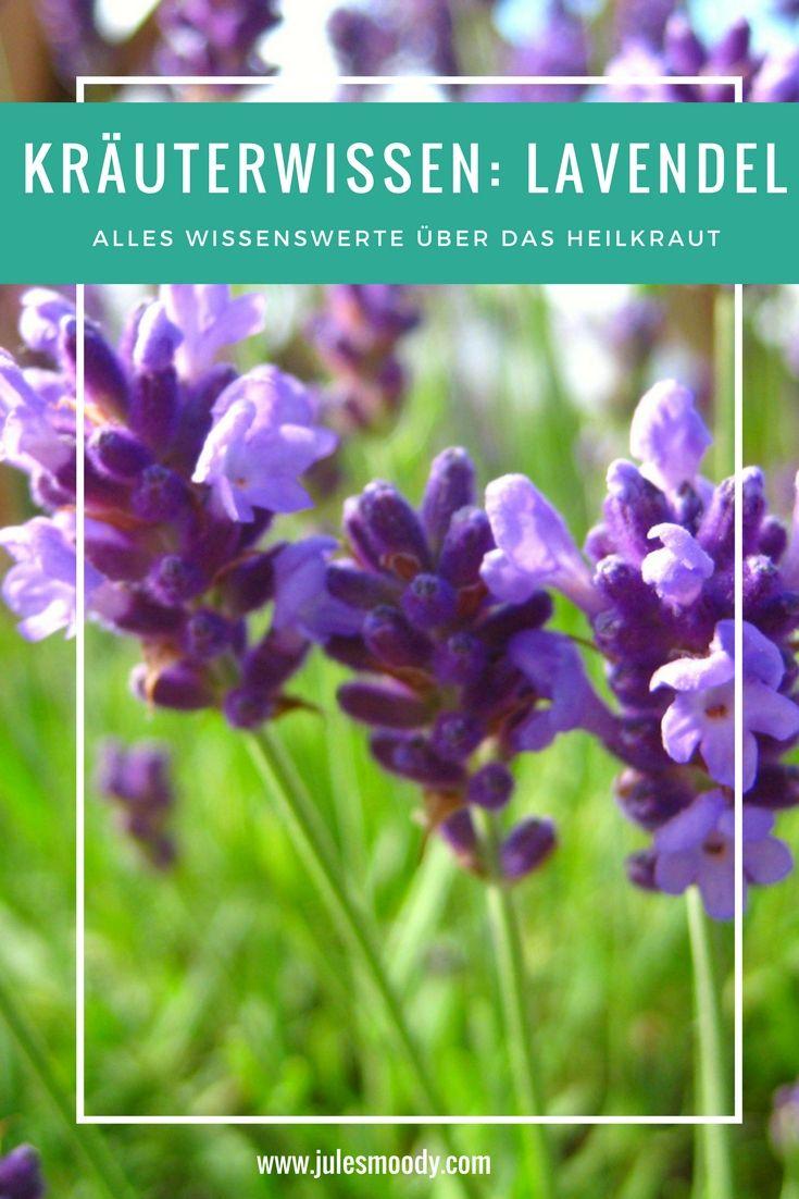 Alles wissenswerte über das wunderbare Heilkraut Lavendel!
