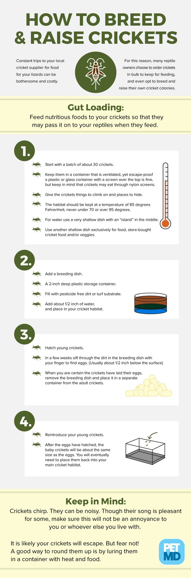 How to Breed and Raise Feeder Crickets Raised feeders