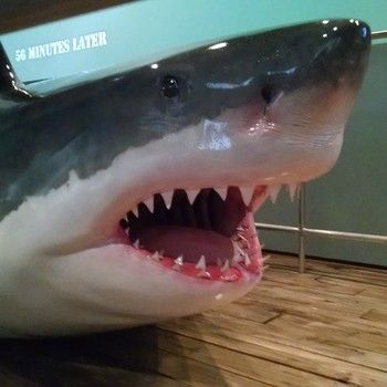 Hallowed = Houston Museum of Natural Science #Houston #shark