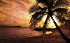 Beach Sunset With Palm Trees Cool Wallpapers
