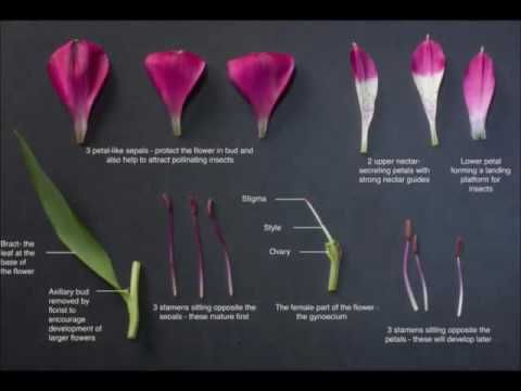 Science and Plants for Schools (SAPS) - supporting plant science in UK secondary schools and post-16 colleges. Follow our channel for biology practicals and ...