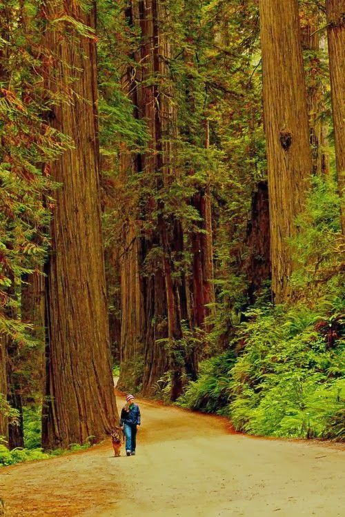 Forest Walk, The Redwoods, California. http://travel.allwomenstalk.com/of-the-worlds-greatest-hiking-trails