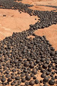 Moqui Marbles:    An unusual type of iron concretion, these round rocks form in the Navajo Sandstone formations spread across northern Arizona, northwest Colorado and Utah.      Don't these ones look like they're headed somewhere!!!