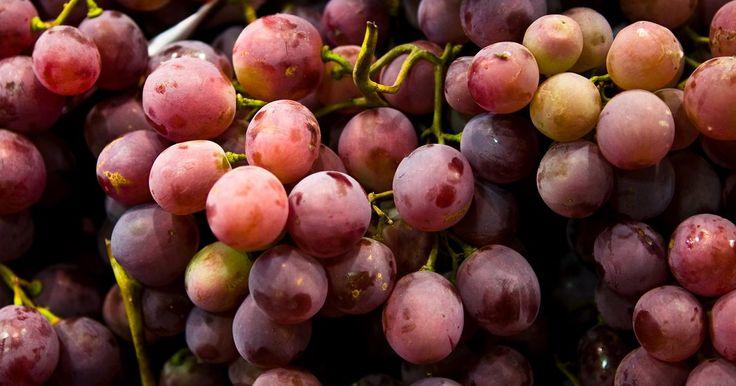 Como manter uvas frescas na geladeira. As diferentes cores da uvas atestam a sua variedade. Vermelha, verde e preta, as uvas podem ser encontradas tanto com e sem sementes, dependendo do gosto do consumidor. Para manter a frescor dessas frutas, refrigere-as por até uma semana. O frio não deixará que elas estraguem e ainda melhorará o seu sabor se consumi-las geladas.