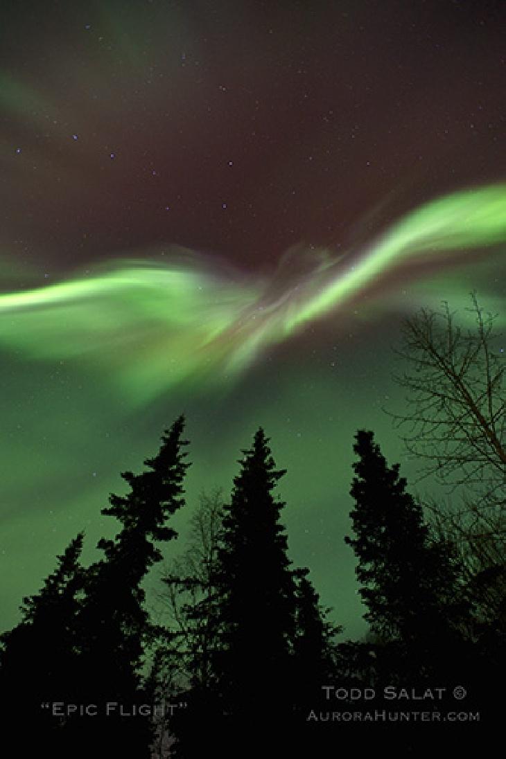 Do you see the majestic bird taking flight in this March 2013 aurora cascade (below Ursa Major - The Big Dipper) near Hatcher Pass, Alaska?