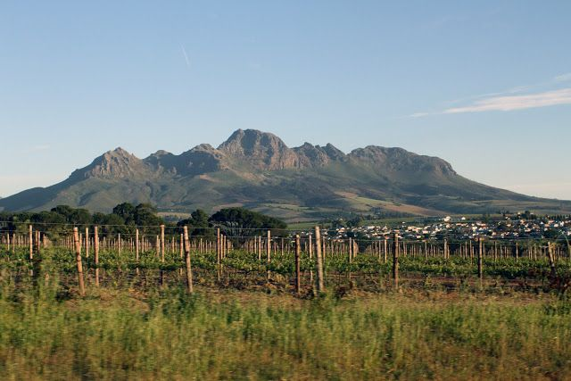 Rose & Fitzgerald: TRAVEL DIARIES : CAPE TOWN, SOUTH AFRICA-