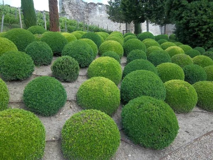 Best Topiary Plants And Trees For Your Garden – Topiary