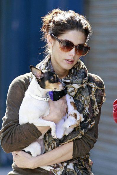 Ashley Greene PonytailHair Beautiful, Art Ashley, Fox Terriers, Hair And Beautiful, Hair And Beauty, Dogs Polo, Cute Dogs, Green Ponytail, Ashley Green