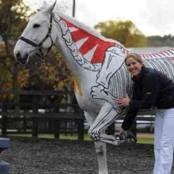 Equine health lectures that uses real 'painted' horses as live anatomical text booksHors Stuff, Horses Anatomy, Equine Health, Life Anatomy, Equine Anatomy, Hors Anatomy, Learning Horses, Painting Horses, Animal