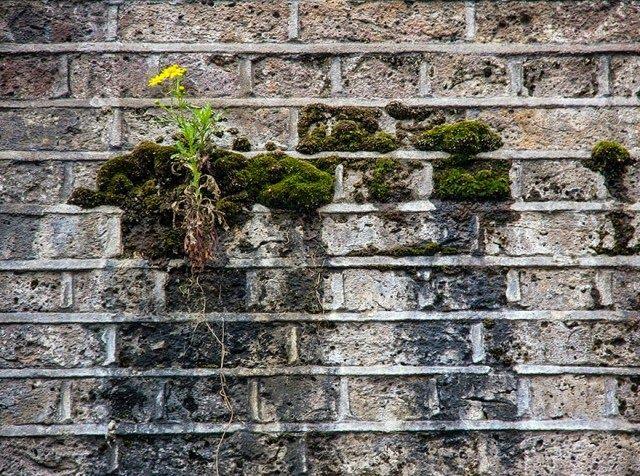 25 Plantas Que Luchan Para Recuperar Su Territorio