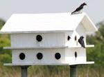 Articles - Purple Martin Place