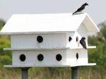 Free martin bird house plans