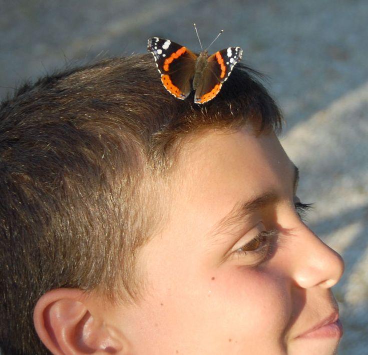 La mente è una farfalla