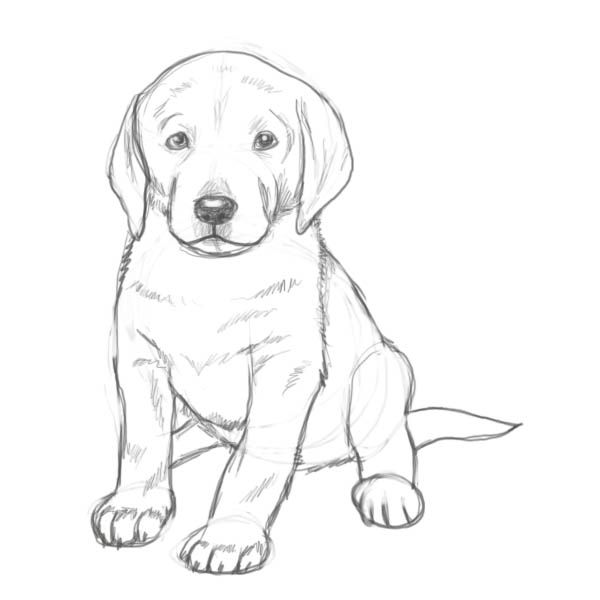 9 best dog drawings images on pinterest draw dog drawings and are you looking for a tutorial on how to draw a puppy look no further here at the drawing factory youll find a complete step by step guide to achieve ccuart Image collections