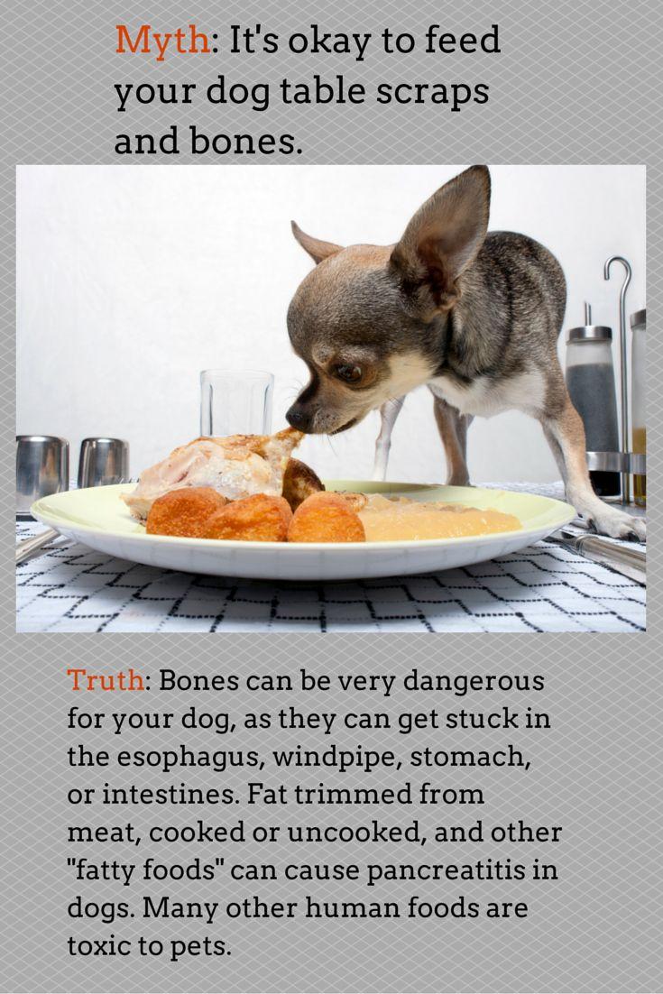 Dog Food Stuck In Windpipe