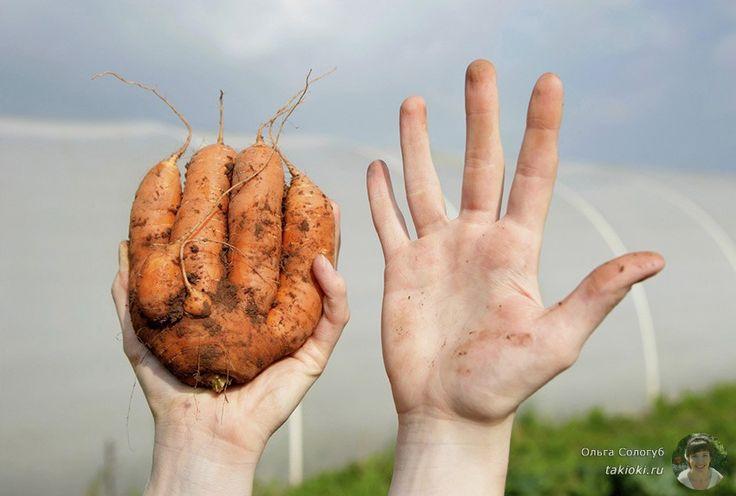 Овощи «нестандарт» - выкидывать нельзя, кушать! - http://takioki.ru/ovoshhi-nestandart/