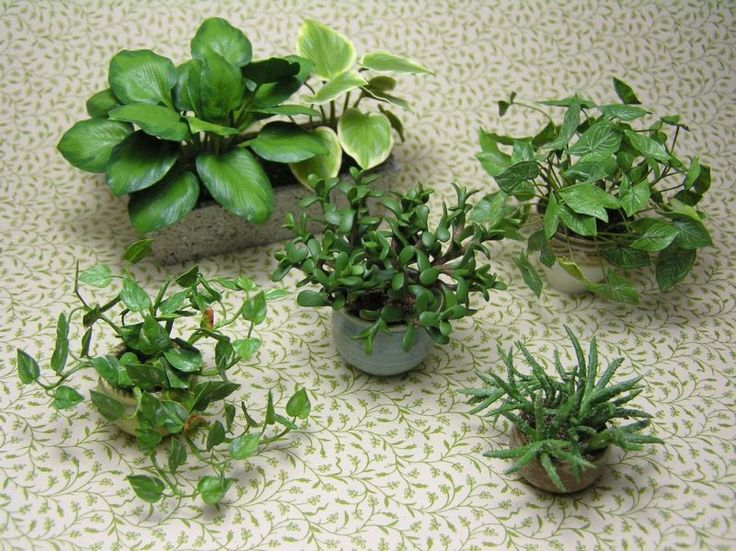 Dollhouse miniature plant submissions for 2015 IGMA Fellow by Carolyn Mohler Kraft