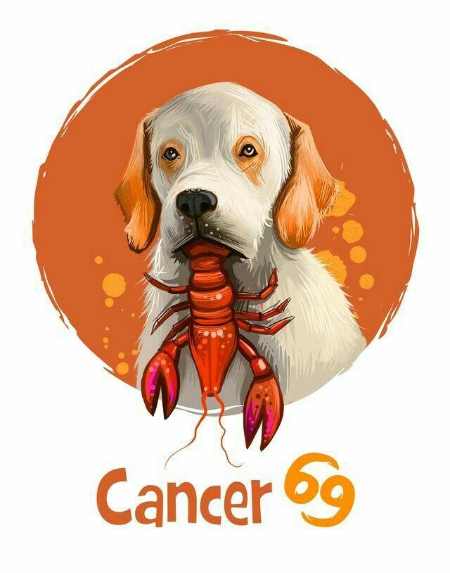 Картинка рак и собака