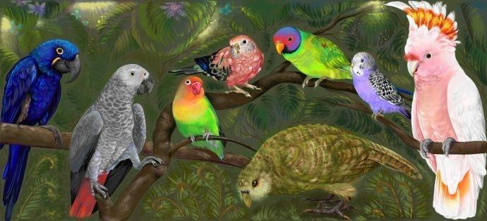 Мечта и попугаи  Описание картины: -Гиацинтовый ара (Южная Америка) -Жако или Серый попугай (Африка) -Неразлучник Фишера (Африка) -Розовобрюхий травяной попугай(Австралия) -Красноголовый кольчатый или Сливоголовый ожереловый попугай (Азия) -Волнистый попугай(Австралия) -Какаду-Инка(Австралия) -Какапо или Совиный попугай(Новая Зеландия)