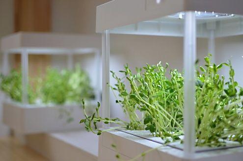 水耕栽培マシン。豆苗を育てているそう。流水もLEDライトも、自動制御されています。(id:77071,その他)