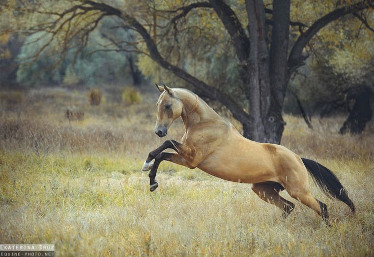 If heaven don't have horses, I ain't going.