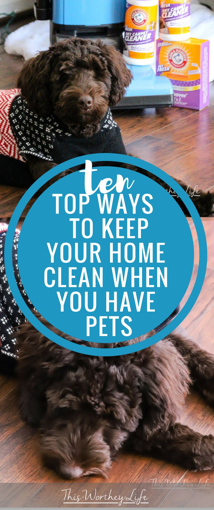 10 Top Ways To Keep Your Home Clean When You Have Pets. The holidays are here, and I'm sharing things I do to make sure my house is clean and ready to go. When you have pets, you may need to go the extra mile. Here's how I avoid doing a lot backbreaking cleaning before the holidays. [ad]