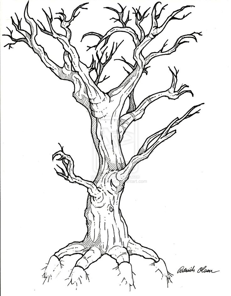 37 best tree tattoo outlines images on pinterest tree for Best tree drawing