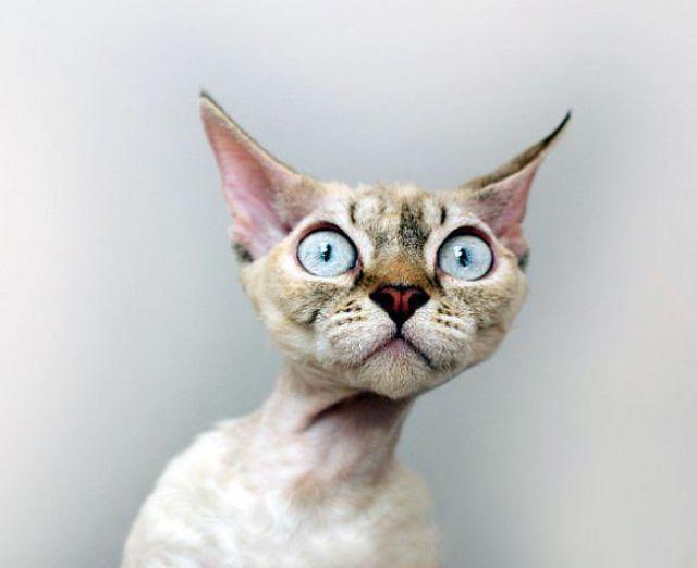 Wish cat looks shaved