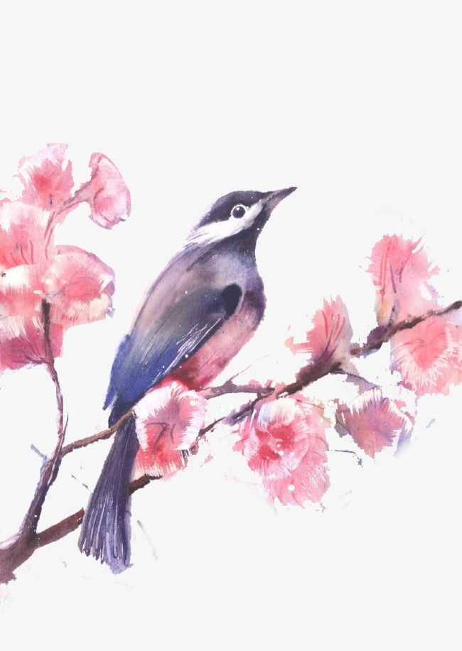 Watercolor Painted Birds And Flowers Birds Flowers Watercolor