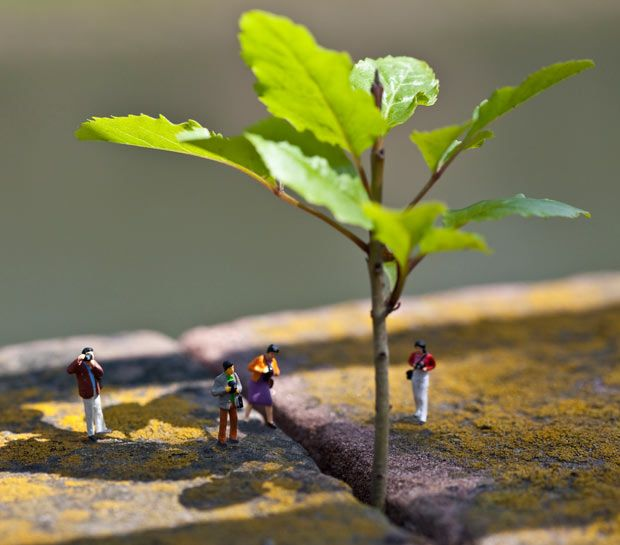 Weeds are Back: little people in the urban jungle in Strasbourg by Vincent   Bousserez.