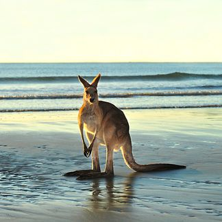Bond University — Gold Coast, Australia | 12 Of The Best Places To Study Abroad