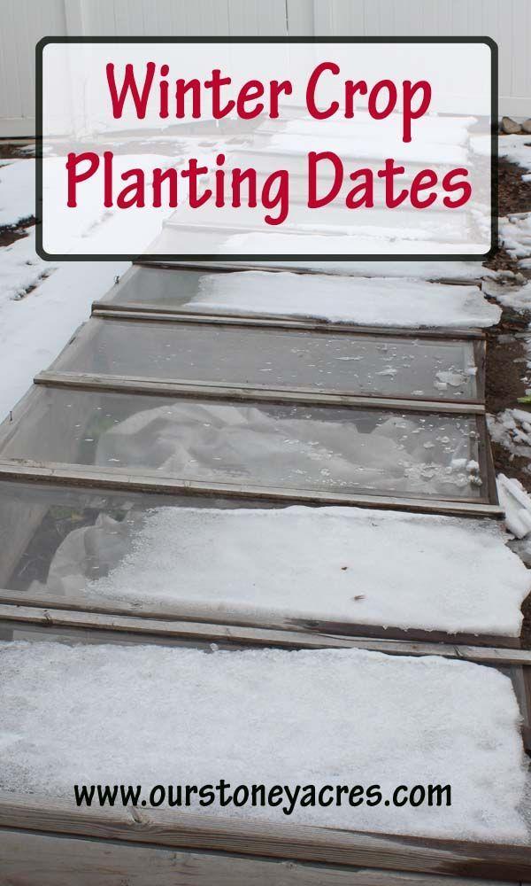 8359 best Winter Gardening images on Pinterest Winter garden