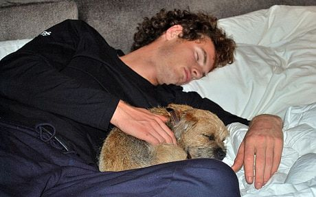 Andy Murray and Novak Djokovic's pooches hoping to bask in their master's glory - Telegraph
