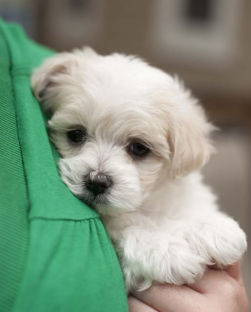puppy                                                                                                                                                                                 More