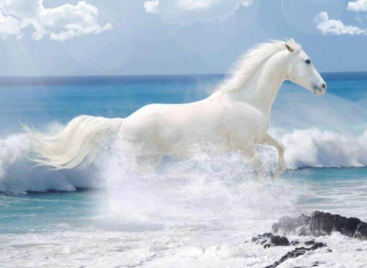 Beautiful Horses Running On the Beach | white horse running on the beach
