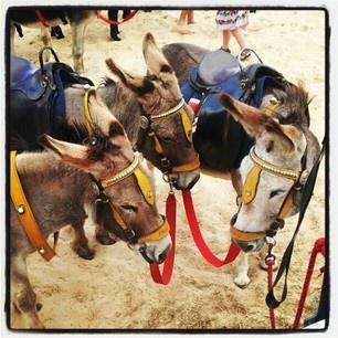 donkeys in great Blackpool