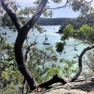 Manly to Spit Bridge Scenic walk. | 26 Sydney Walks That Will Take Your Breath Away