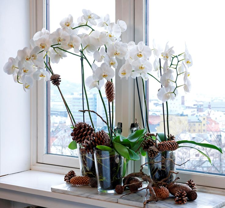 Hvordan holde liv i orkidéen din - Minoase